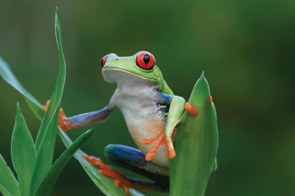 Costa-Rica-Turismo-Accesible