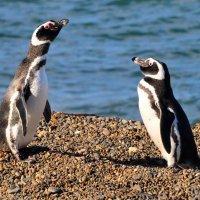 pingüinos en Puerto Madryn turismo accesible