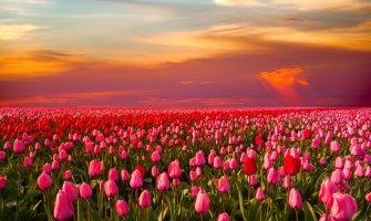 Viaje a Ámsterdam y sus tulipanes accesible en silla de ruedas
