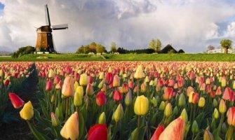 campos-de-tulipanes-en-holanda-accesible