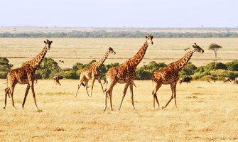 turismo accesible en africa, safari accesible