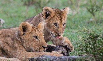 Safari por Kenia en silla de ruedas