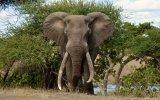 Elefante en el parque Kruger accesible para silla de ruedas
